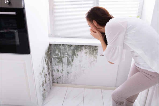 Mold Removal Service Long Island