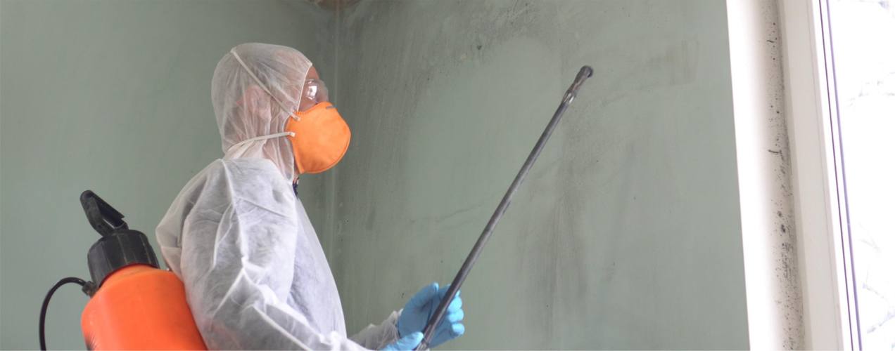 Mold Remediation Vs Removal - What's the Difference?
