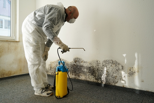 Mold Remediation Service Nassau Suffolk County